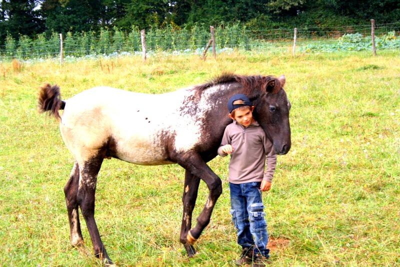 découverte du cheval par les enfants